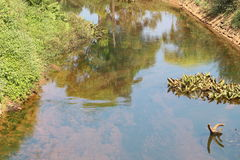 Ren seende kanal med skuggan av naturen som reflekterar Arkivfoto