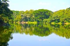 Ren sjö i grön vårsommarskog Royaltyfria Foton