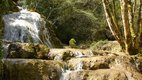 Ren vattenkälla av bergskogen 4K - 7 arkivfilmer