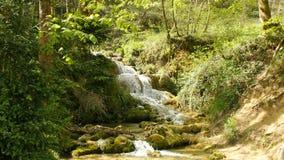Ren vattenkälla av bergskogen 4K - fortfarande + panna 5 lager videofilmer