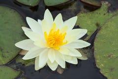 ren white royaltyfri foto