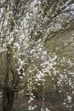 Ren whiteness arkivfoto