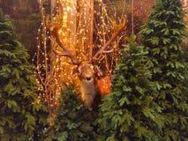 A rena no Natal encantou a floresta com luzes amarelas Foto de Stock