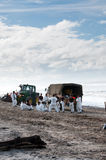 Rena oil spill clean up workers Royalty Free Stock Photos