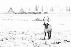 A rena pasta na tundra imagem de stock royalty free