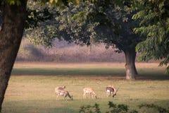 A rena pasta no gramado ao lado do túmulo de Akbar Foto de Stock