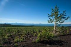 Renacimiento de un bosque en el paisaje volcánico alrededor del volcán de Tolbachik imágenes de archivo libres de regalías