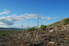 Renaissance d'une forêt Photos libres de droits