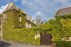 Renaissance Mansions covered with ivy. Chinon. France Royalty Free Stock Images