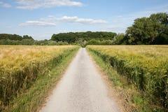 Renania settentrionale-Vestfalia, campi di grano, campi dell'orzo e Immagine Stock Libera da Diritti