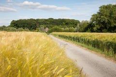 Renania settentrionale-Vestfalia, campi di grano, campi dell'orzo e Fotografie Stock