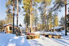 Renar på vintern Rovaniemi brukar Lapland nordliga Finland Royaltyfria Foton