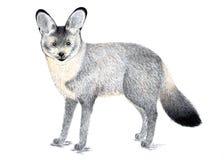 renard 'bat'-à oreilles Illustration d'aquarelle Illustration de Vecteur