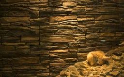 Renard de Fennec dans le zoo image libre de droits