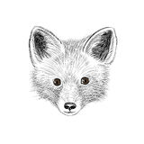 renard Renard d'animal sauvage regardant l'appareil-photo Visage de croquis de bébé de Fox Illustration Stock