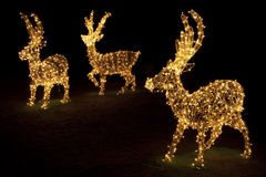 Renas iluminadas para o Natal Imagem de Stock Royalty Free