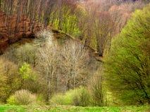 Renascence леса весеннего времени стоковая фотография