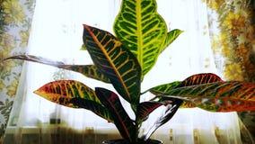 Renascimento mágico do renascimento da água potável crescente e de levantar-se da plântula das plantas após a seca longa Lapso de fotos de stock