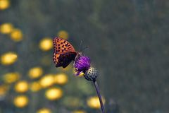 Renbo butterfly stock photos