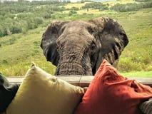 Rencontre d'éléphant Images libres de droits