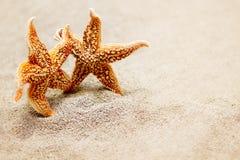 Rencontrer deux étoiles de mer Le concept d'un voyage triotic pour deux ou des vieux amis de la réunion deux Images libres de droits