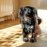 Rencontrez Donna, un chien métis et égaré trouvé dans un pré sur l'île grecque de Lesbos Images libres de droits