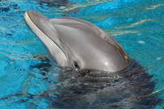 Rendement de Dophin Photo stock