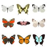 Render of butterflies Royalty Free Stock Photos