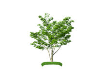 Render of the carpinus bush Royalty Free Stock Images