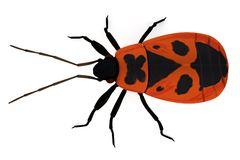 Render of firebug Royalty Free Stock Photography