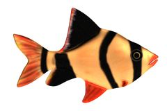 Render of fish. Realistic 3d render of fish Royalty Free Stock Photo