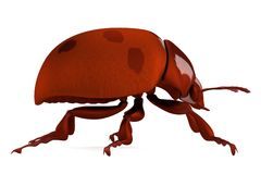 Render of ladybug Stock Image