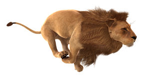 Render lion running Stock Photography