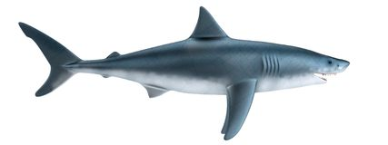 Render of shark Stock Photo
