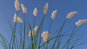 Ryegrass against blue skies Royalty Free Stock Photo