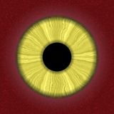 Rendered human eye Stock Images