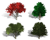 Rendering of four different kind of trees Stock Photo