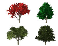 Rendering of four different kind of trees Stock Images