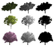 Rendering of three different kinds of trees Stock Photo