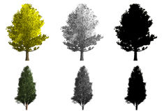 Rendering of two different kinds of trees Royalty Free Stock Photography