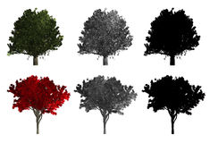 Rendering of two different kinds of trees Royalty Free Stock Image
