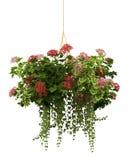 rendição 3d de um potenciômetro de flor realístico isolado no branco Imagem de Stock
