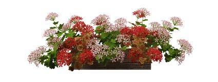 rendição 3d de um potenciômetro de flor realístico isolado no branco Fotos de Stock Royalty Free