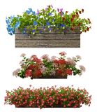 rendição 3d de uma coleção realística do potenciômetro de flor isolada no wh Imagem de Stock Royalty Free