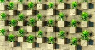 rendição 3d Plantas carnudas na parede Foto de Stock Royalty Free