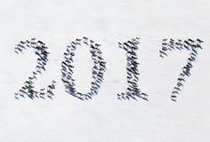 Rendier in toendra als tekstdoopvont 2017, hoogste mening Stock Fotografie