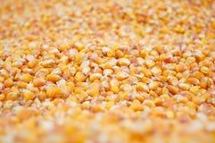 Rendimento del cereale Fotografie Stock