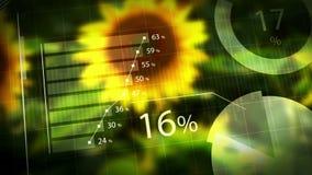 Rendimento del girasole, grafici animati di informazioni per i risultati di raccolto del girasole come fondo agricolo archivi video