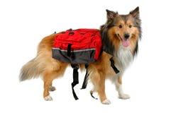 Free Rending Dog Stock Images - 828394