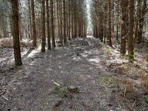 Rendlesham skog i våren - Suffolk Arkivfoto
